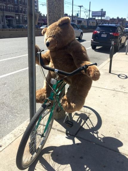 Bike Bear.jpg